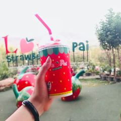 Love Strawberry Pai User Photo