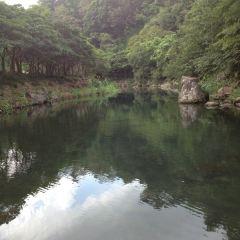 천지연폭포 여행 사진