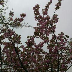 Binjiang Park User Photo