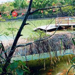 紫蓮森林度假村用戶圖片