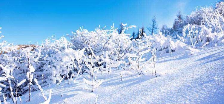 Mount Cuiyun Ski Resort3