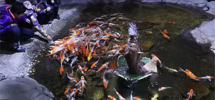 鄭州海洋館1