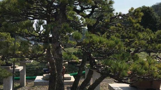 Guoqiang Bonsai Garden