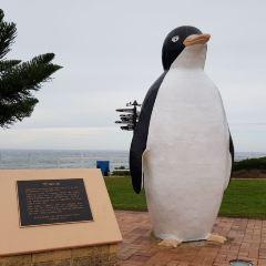 Penguin User Photo