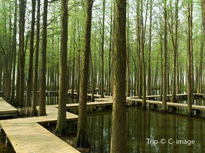 리중수상삼림공원