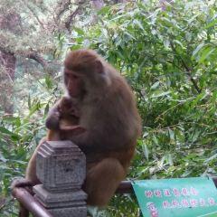 링쿤산 여행 사진