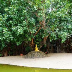 왓판타오 사원 여행 사진