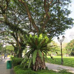 Cenotaph User Photo