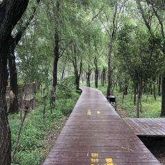 Beidaihe Wetland Park User Photo