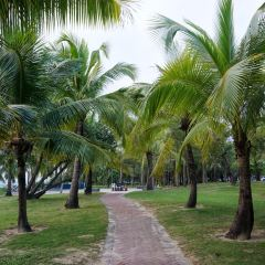 Coconut Dream Corridor User Photo