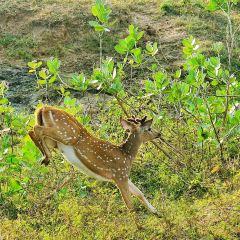 쿠마나 국립공원 여행 사진
