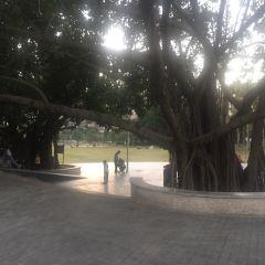 Shenzhen Central Park User Photo