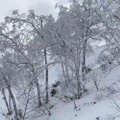 Ningle Terrace User Photo