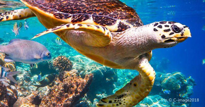 蘭卡威海底世界1