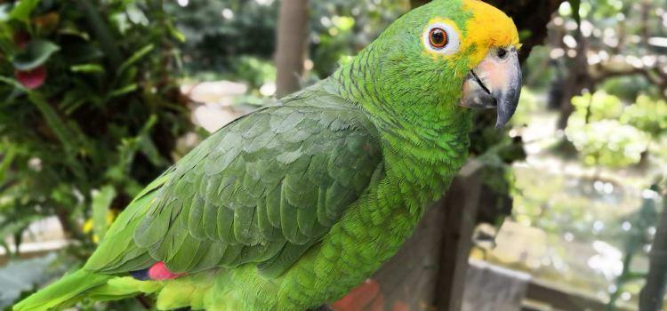 Chimelong Bird Park3
