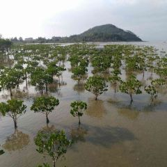 Hailing Island National Wetland Park of Mangrove Forest User Photo