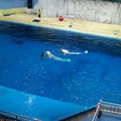 Linyi Polar Ocean World User Photo