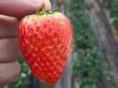 多味草莓園