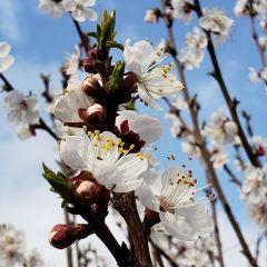 杏花溝用戶圖片