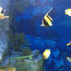 Marine World Uminonakamichi User Photo