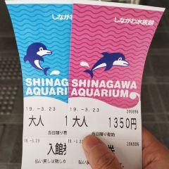 시나가와 수족관 여행 사진