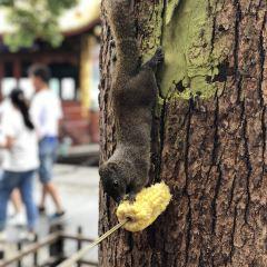 Jiuzhan Park User Photo