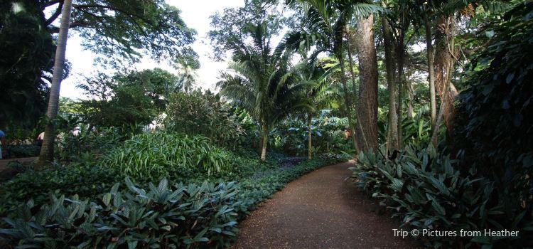 Allerton Tropical Gardens1