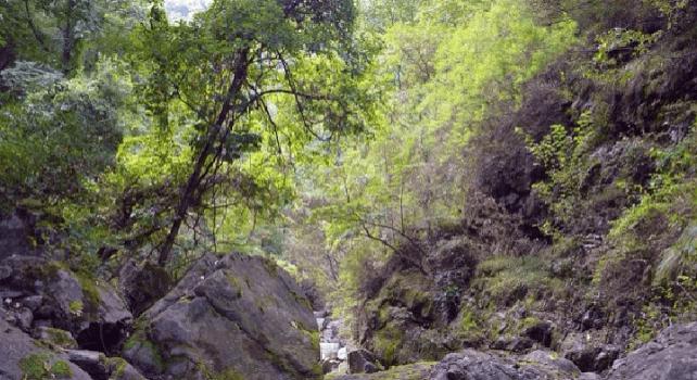 九龍潭自然風景区1