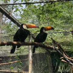 紅山森林動物園用戶圖片