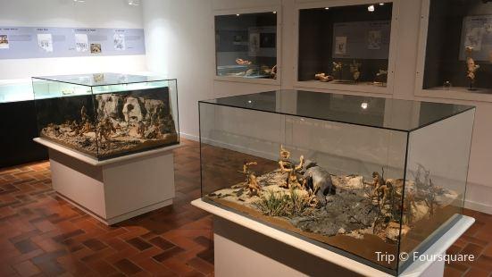 Musee de Paleonthologie Terra Amata