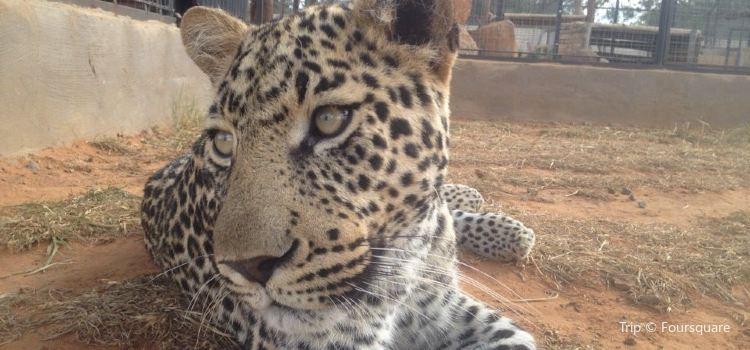 Cheetah Experience2
