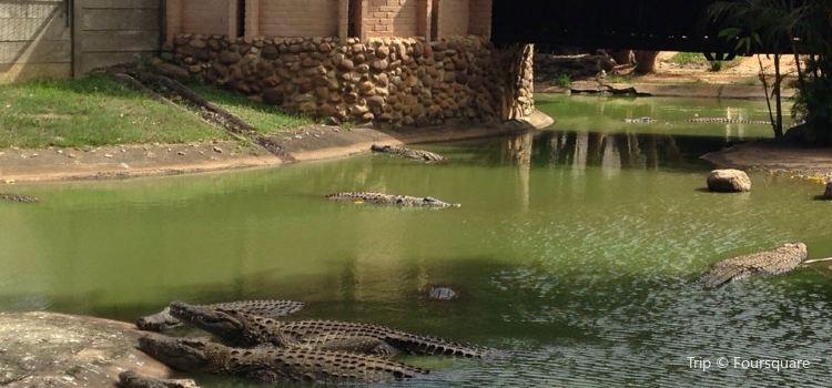 Riverbend Crocodile Farm3