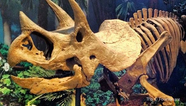 Carnegie Museum of Natural History3