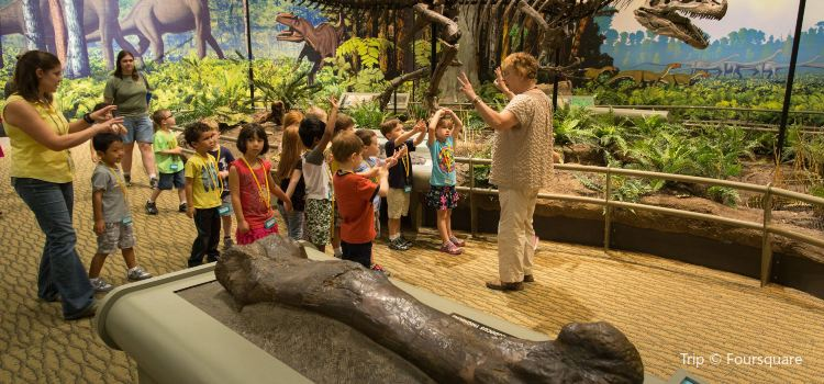 Carnegie Museum of Natural History1