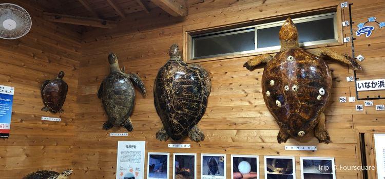 屋久島海龜博物館3
