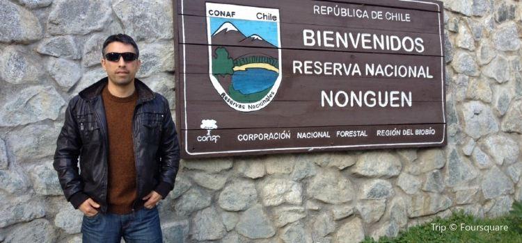 Reserva Nacional Nonguen2
