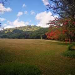 National Tropical Botanical Garden User Photo