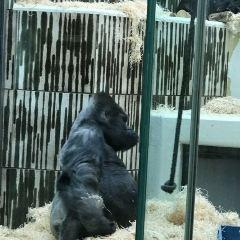 Nuremberg Zoo (Tiergarten) User Photo