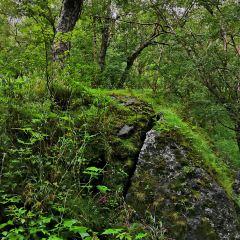Pontocho Park User Photo