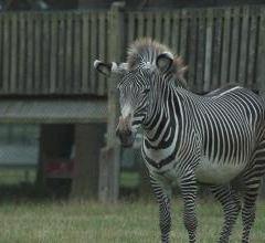 Bristol Zoo Gardens User Photo