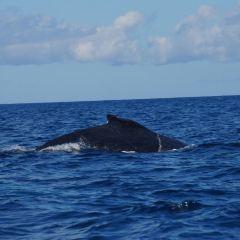 Nautilus User Photo