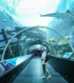 新加坡游记图文-三天玩转新加坡圣淘沙名胜世界