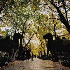 石象路用戶圖片