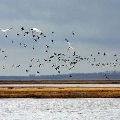 莫莫格國家級自然保護區用戶圖片