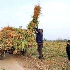 沙溝湖農業示範園用戶圖片