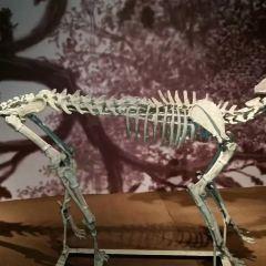 古動物化石博物館用戶圖片