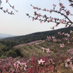 Taohuajiang Forest Park User Photo