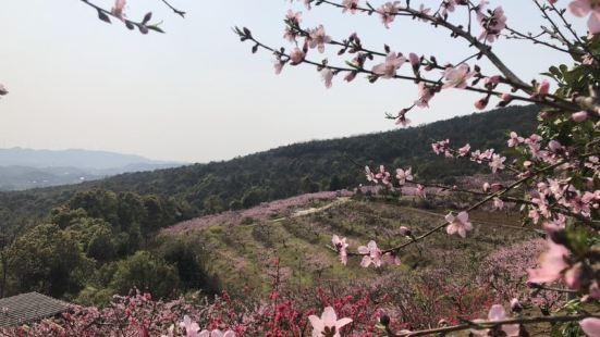 Taohuajiang Forest Park