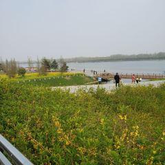 Ginkgo Lake Glass Road User Photo