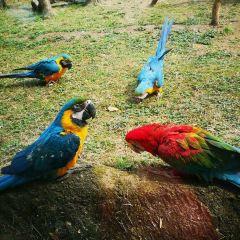 항저우 야생동물원(항주 야생동물세계) 여행 사진